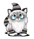 Ragdoll Cutie Face Kitten
