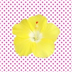 Yellow Tropical Flower on Polka Dots