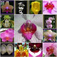 Extraordinary Orchids
