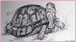 Tutrle, tortoise, wildlife art