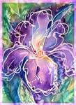 Iris, purple flower, art,