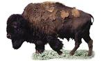 Bison Plains