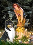 MIDSUMMER'S EVE <br>& Tri Color Collie