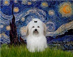 STARRY NIGHT<br>& Coton de Tulear