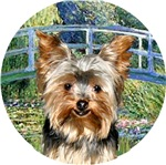 Yorkshire Terrier #17<br>in Lily Pond Bridged