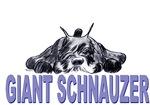 schnauzer laying