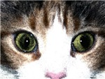 Colored Art Image of Cats Eyes