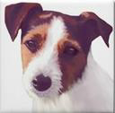 JRT Digital Artwork