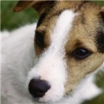 JRT Head Shot