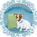 Old Fashioned JRT 