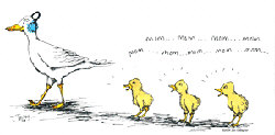 'Mom' ducks