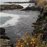 Seal Rock Coastal Scene