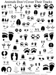 North American Animal Tracks Guide