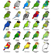25 Birdorable Parrots!