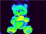 neon bears