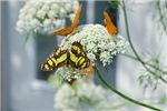 Summer Garden Flowers and Butterflies