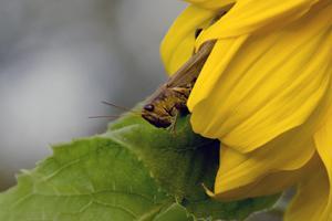 Cute Summer Grasshopper