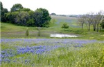 Spring scene Bluebonnets and pond