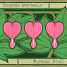 Bleeding Heart - Dicentra Spectabilis