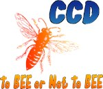 CCD to Bee or Not To Bee