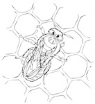 Baby Bee Hive