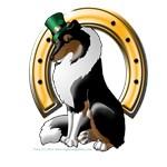 Irish Rough Collie TriColor