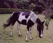 Paint Horse - Sugar Baby