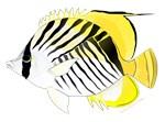 Threadfin Butterlyfish