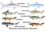 Eight Sharks