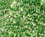 Agriculture Pattern