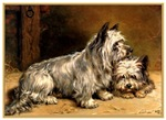 VINTAGE DOG ART: TWO TERRIERS