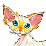 Devon Rex Red Point Items