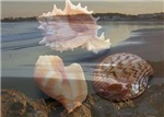 Pink Sea Shells and Beach Memory