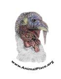 Animal Place Turkey