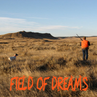 Field of Dreams Collection