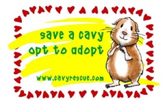 Save a Cavy