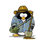 Treasure Hunter Penguin