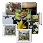 Nature Photo Mouse Pads