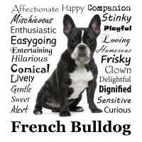 Frenchie Traits