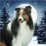 Winter Sheltie