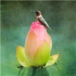 Hummingbird and the Lotus