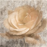 Vintage Rose III