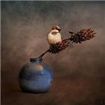 Little Sparrow Friend