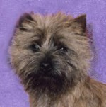 The Cairn Terrier Collection