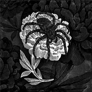 Gothic Spider On Flower
