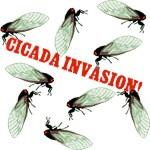 Cicada Invasion T-shirts