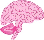 Pink Brain T-shirts & Gifts