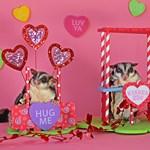 Valentine's Day #11