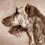 Irish Wolfhound Sepia