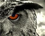 Under my watchful eye